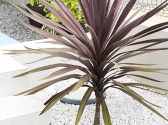 目を引く、鮮やかな色の植物