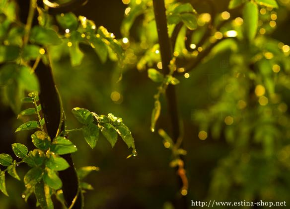 夜に行う、植物への水やりが癒しの時間