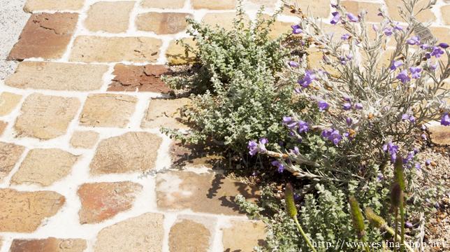 レンガと植物がより柔らかいイメージを