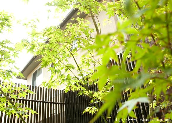 お庭のシンボルツリーは紅葉