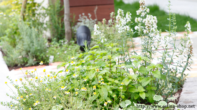 お庭で育ったハーブでハーブティーを愉しむ