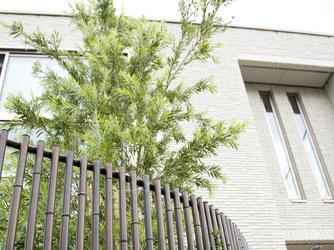 シンボルツリーが建物のワンポイントに