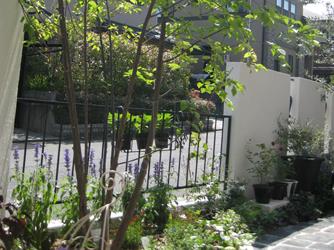 お庭のシンボルツリーは樹形のすっきりとしたシマトネリコ