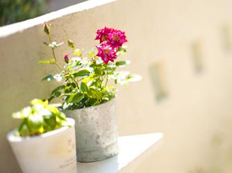大好きな植物を自分らしい飾り方で