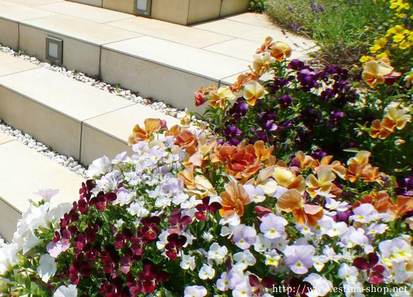 アプローチの花壇には、ご家族で季節の花を