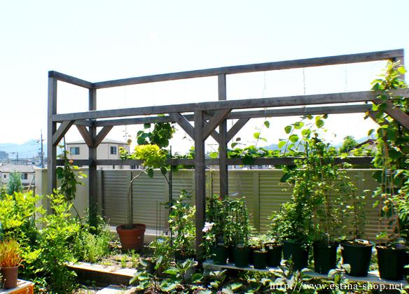 収穫が楽しみな菜園スペースにはパーゴラも設置