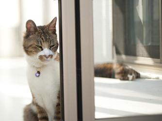 日中の温かいガーデンルームはネコのお気に入りの空間