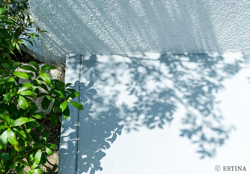 シンプルな白い壁をキャンパスに植物の陰影が伸びる。